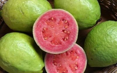 GUAVA: PROPRIETÀ DI UN FRUTTO RICCO DI ANTIOSSIDANTI