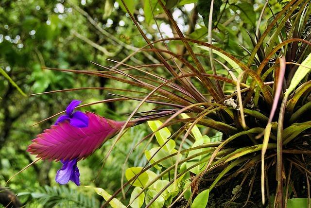 Exotic Flower 917025_640