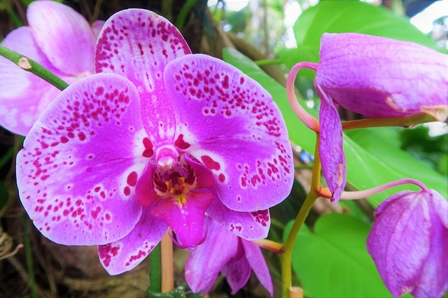 orchid-4081579_640