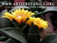 arteebotanica.org