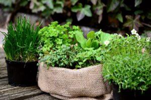 garden-plants-6204106_1280