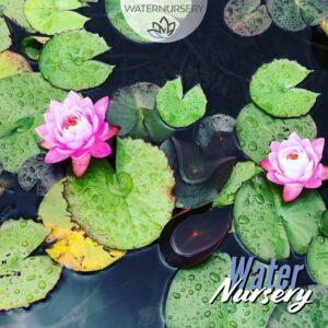 Water Nursery