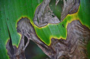 leaf-285193_640