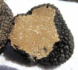 truffle-203031_640